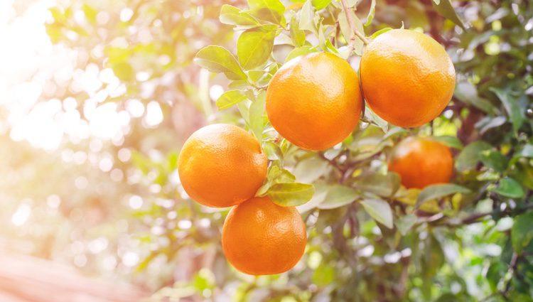 El zumo de naranja es recomendable para enfermedades como el colesterol o la diabetes.