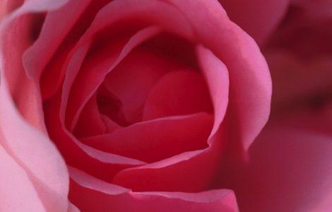 El agua de rosas tiene grandes beneficios para la piel